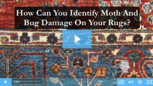 Doyou have moths or bugs in your rugs