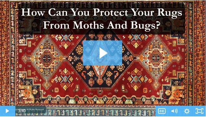 How can you protect your rugs from moths and bugs